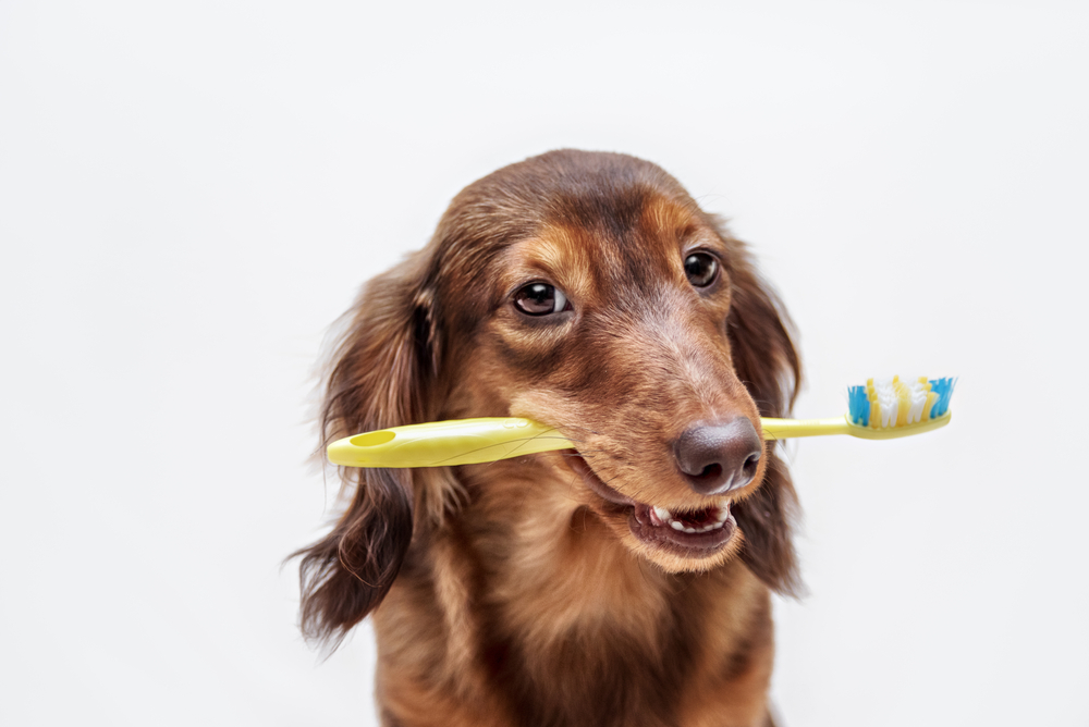 dog with a toothbrush in his mouth